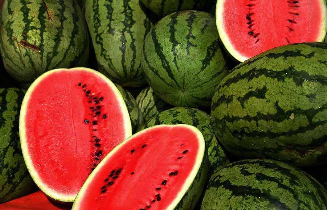 watermelons-shake-tarbuj