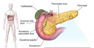 xxBlausen_0701_PancreaticTissue