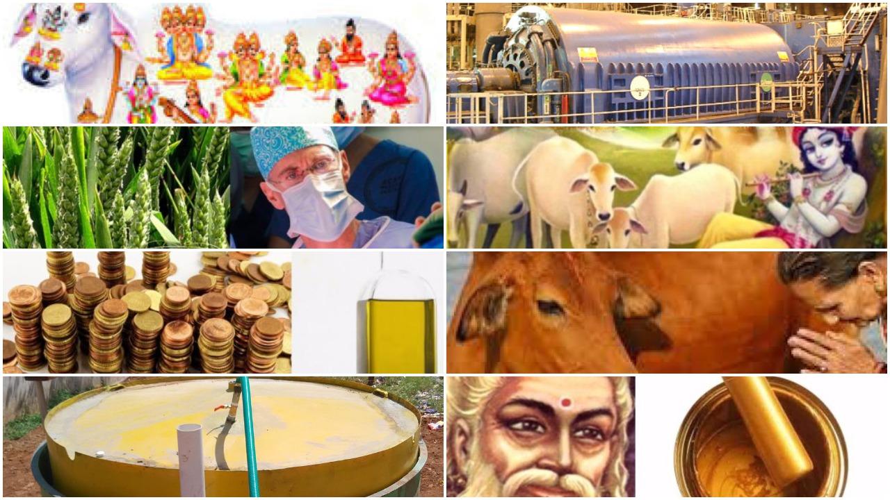 indian cow urine krishna gomata radha braj vrindavan gomutra गोमूत्र भारतीय देशी गाय माता की नस्ल
